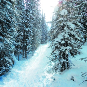Sourdough Trail offers secluded snowshoeing, skiing