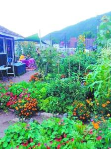 Garden.ScrapstoSoil