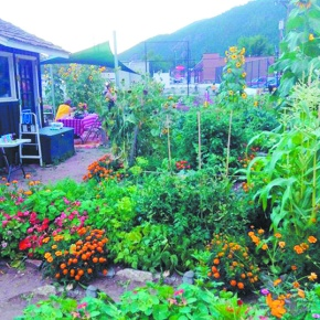Community gardens cultivate flowers,relationships