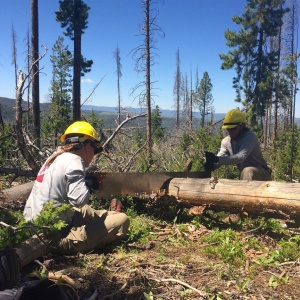 Crew members clearing downed tree from the Continental Divide National Scenic Trail