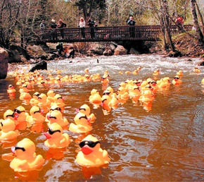 Duck Race offers expanded prizes, festivalactivities