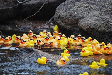 DuckRace1