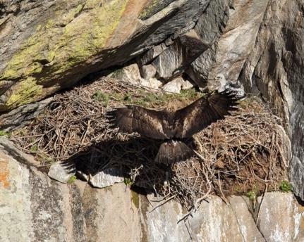 Eagle.sm